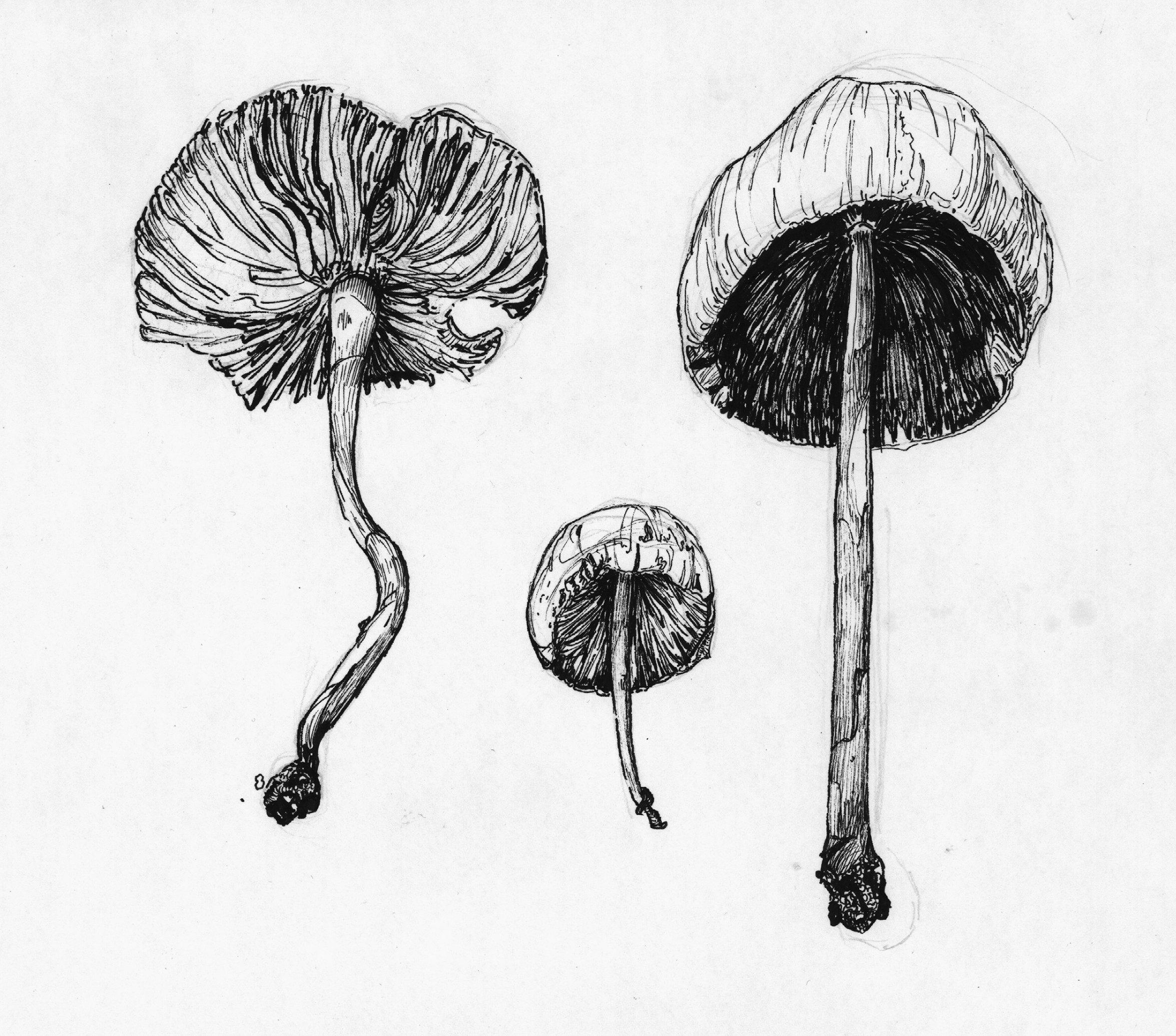Wir - Mycelium Netzwerke